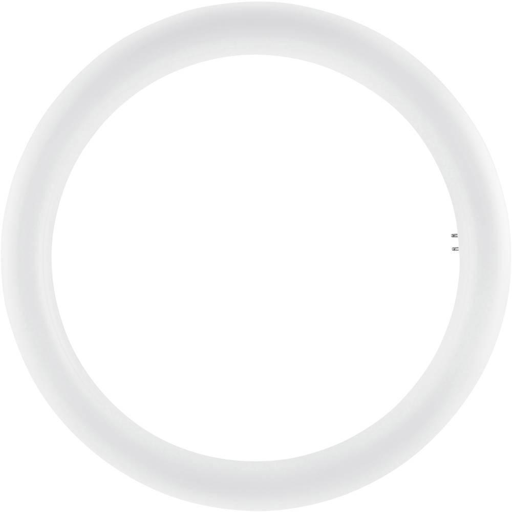 Osram SubstiTUBE LED T9 circular (EM/Mains) 20W - 840 | Replacer for 32W